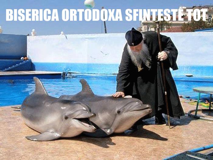 sfintirea delfinilor