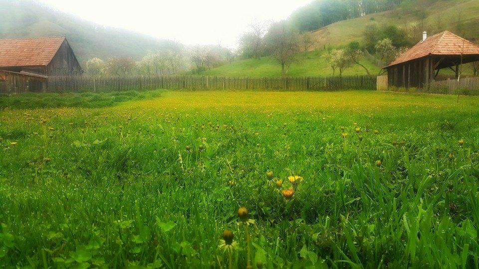 vallea verde