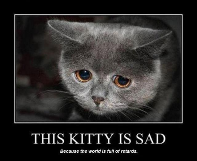 this-kitty-is-sad