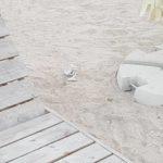 gunoaie plaja (2)