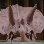 hatzegopteryx-(3)