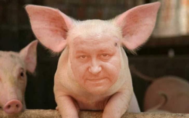 daniel-fenechiu-e-un-porc